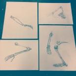 Skeleton Stills